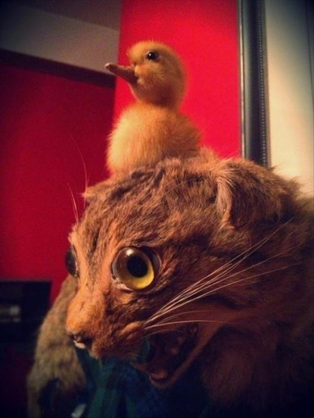 taxidermy gone wrong, dumpaday (15)