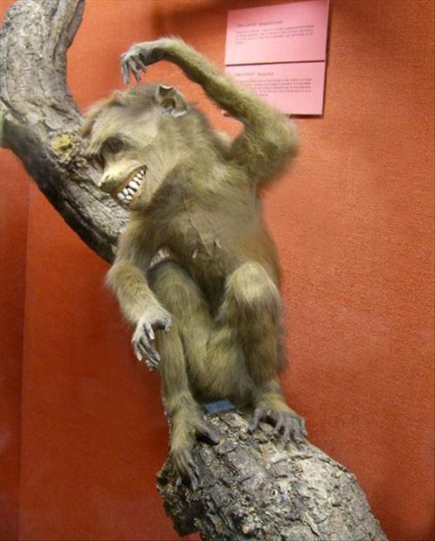 taxidermy gone wrong, dumpaday (16)
