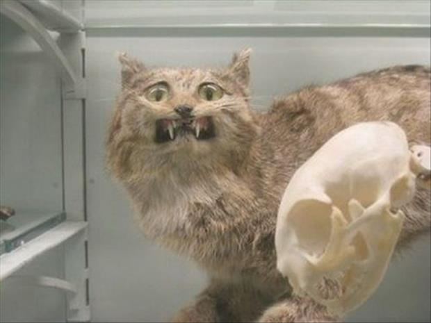 taxidermy gone wrong, dumpaday (19)