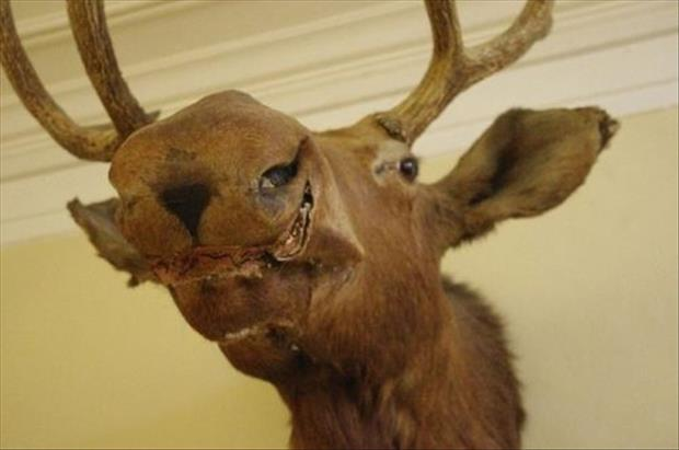 taxidermy gone wrong, dumpaday (2)