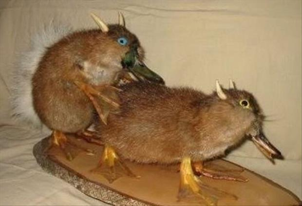 taxidermy gone wrong, dumpaday (21)