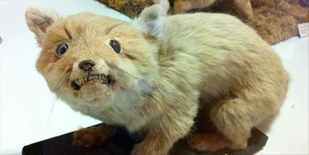 taxidermy gone wrong, dumpaday (23)