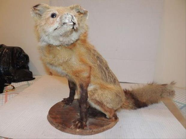 taxidermy gone wrong, dumpaday (24)