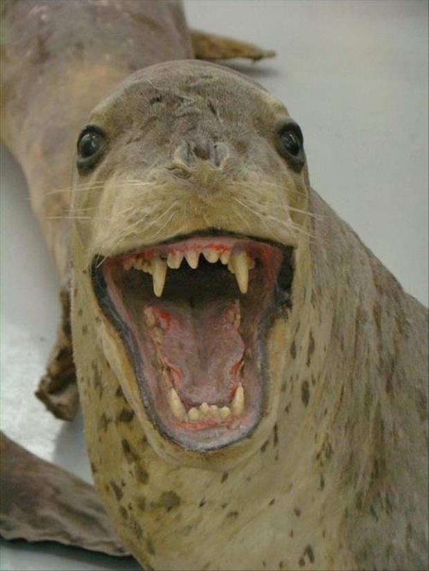 taxidermy gone wrong, dumpaday (3)