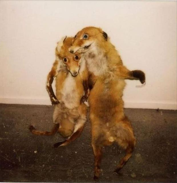 taxidermy gone wrong, dumpaday (4)