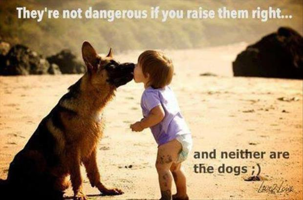 they're not dangerous dogs