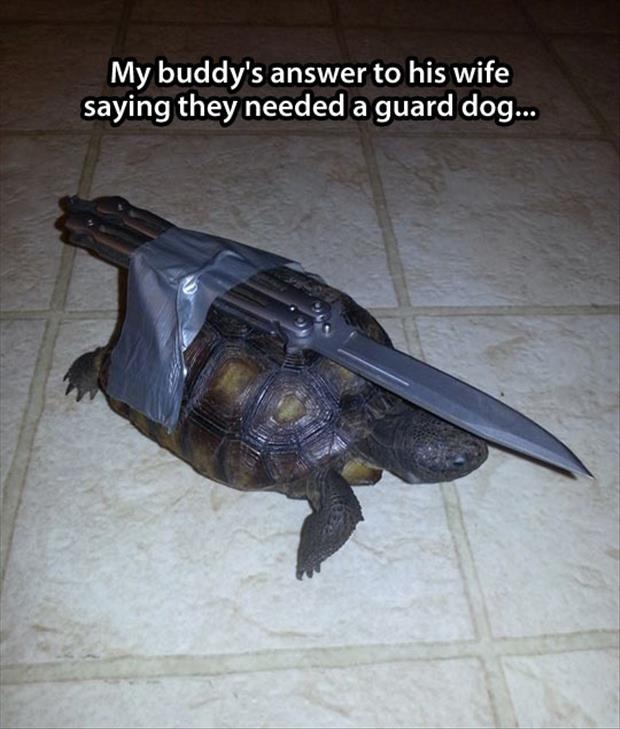 turtle with a knife