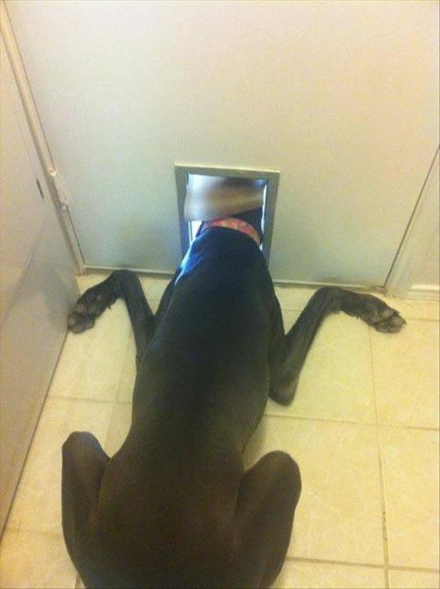 we need a bigger doggy door
