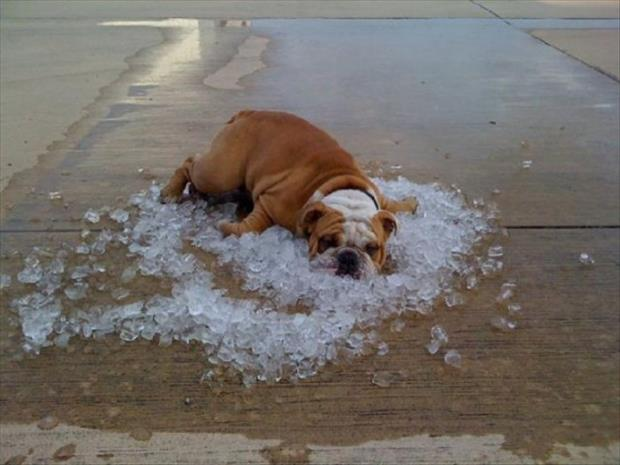 you know its hot outside when, funny pictures (20)