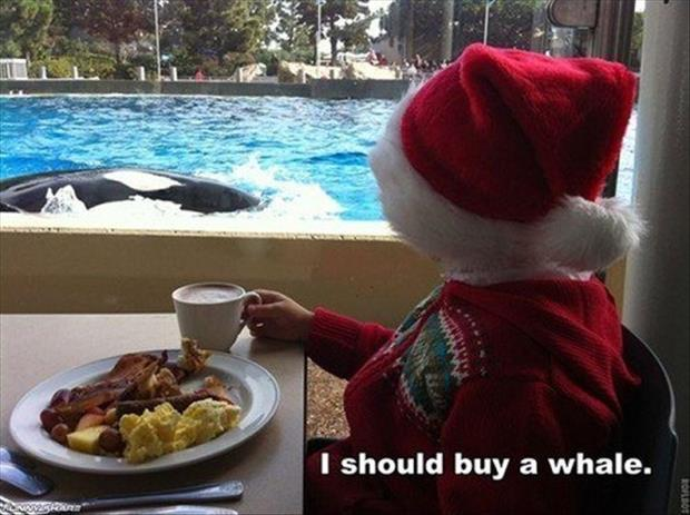 I should buy a whale