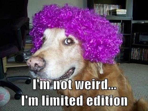 a funny dog in a wig