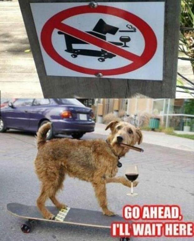 a funny dog signs