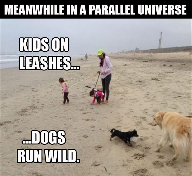 a kids on leashes dogs run free