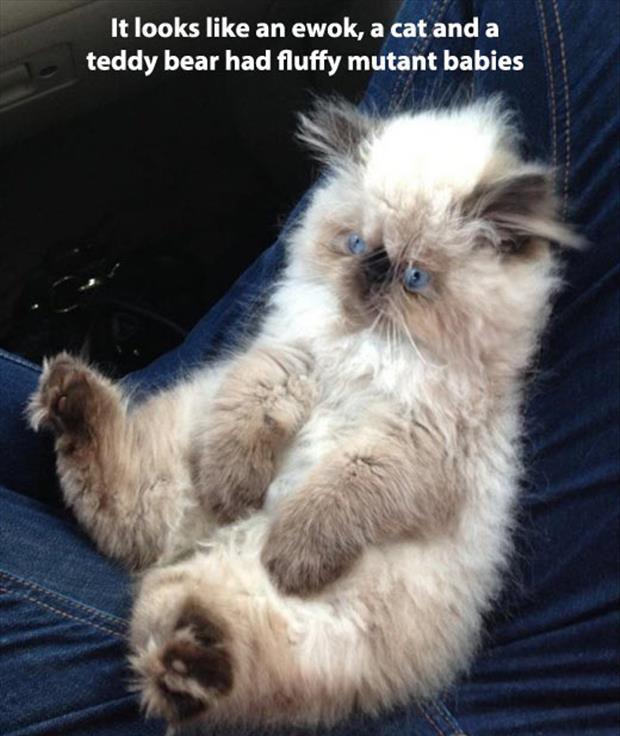 animal pictures with captions, dumpaday (1)