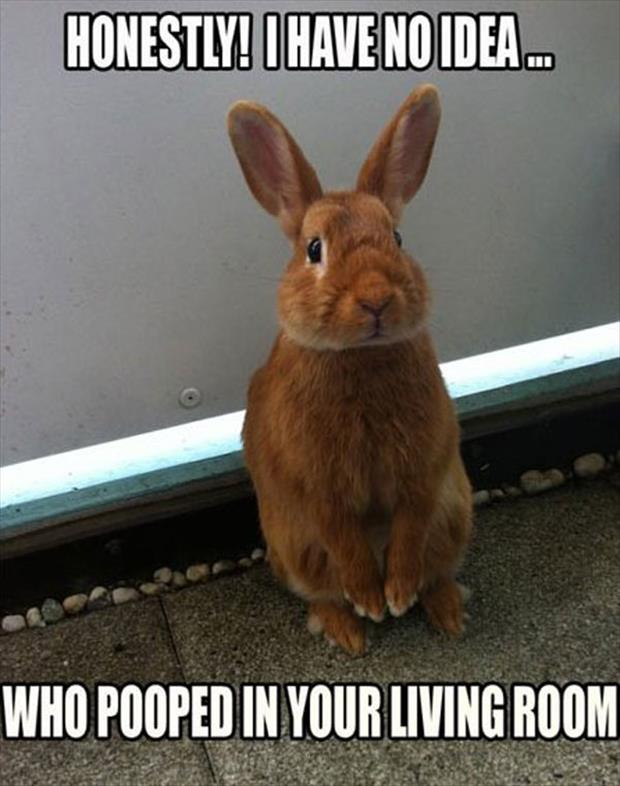 animal pictures with captions, dumpaday (12)