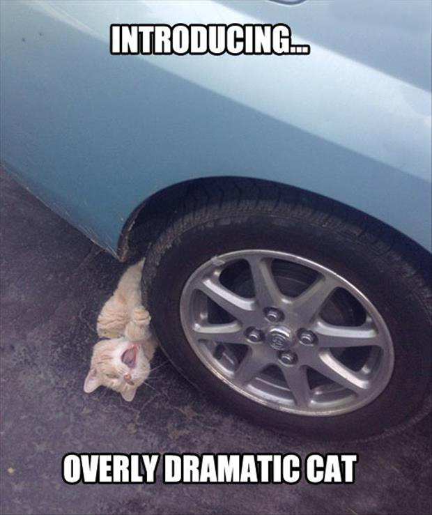 animal pictures with captions, dumpaday (9)