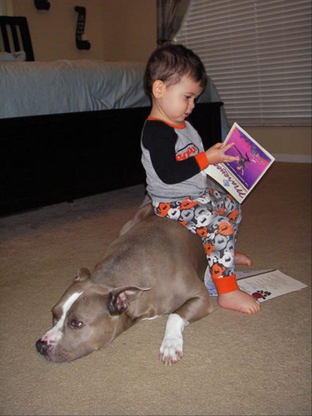 animals and babies, dumpaday pictures (4)