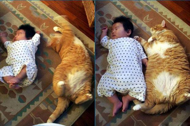 animals and babies, dumpaday pictures (5)