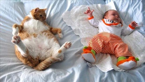 animals and babies, dumpaday pictures (7)