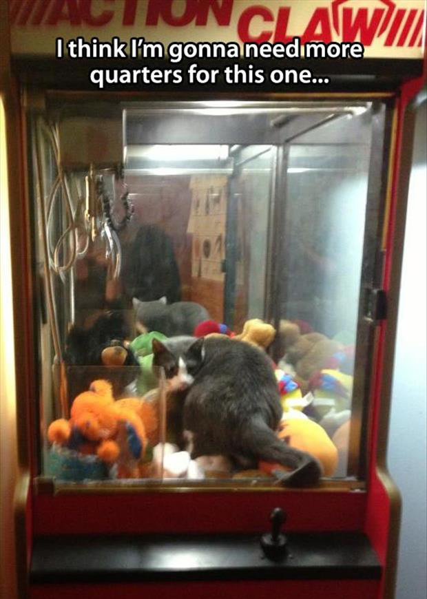 claw machine and cat