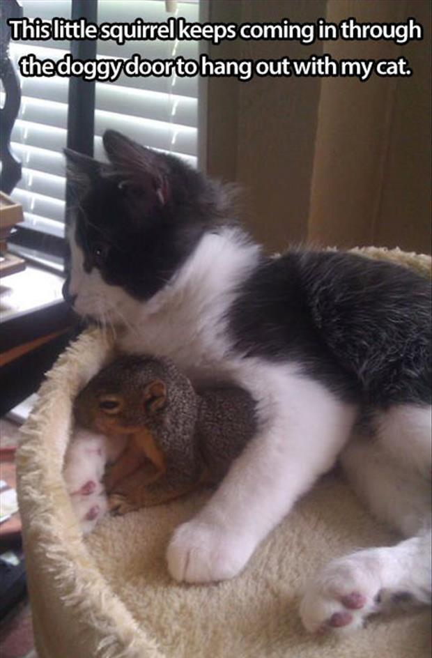 cute cat and squirrel