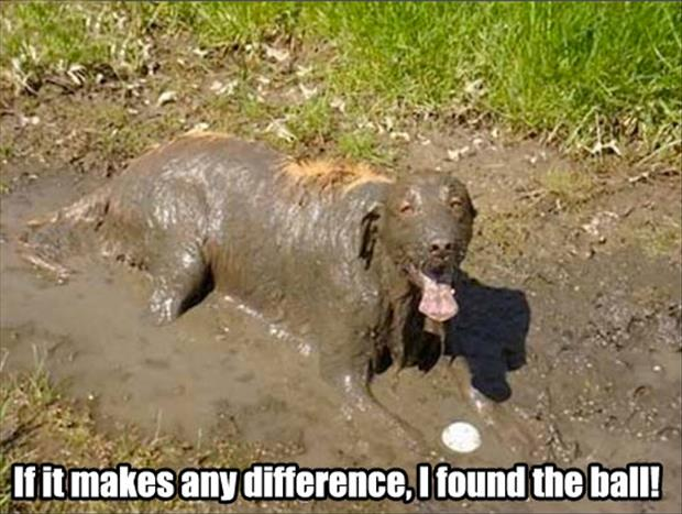 dog playing in the mud