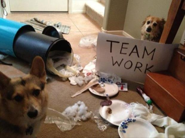 dog shaming team work