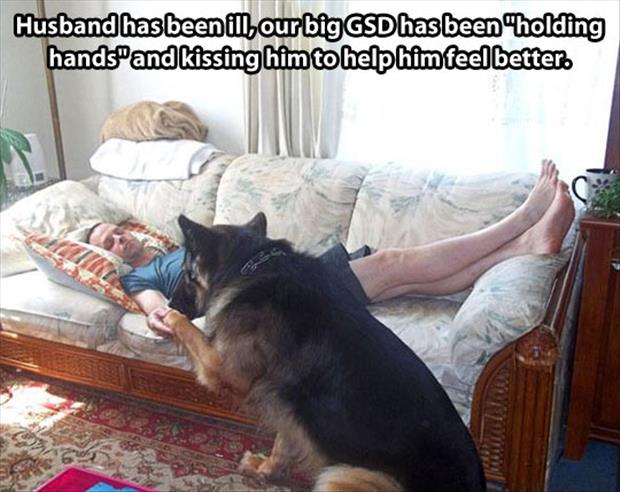 dog sits by man sides