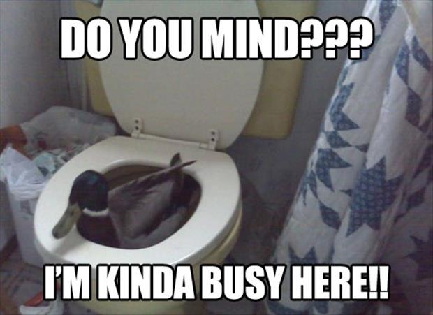 duck on toilet