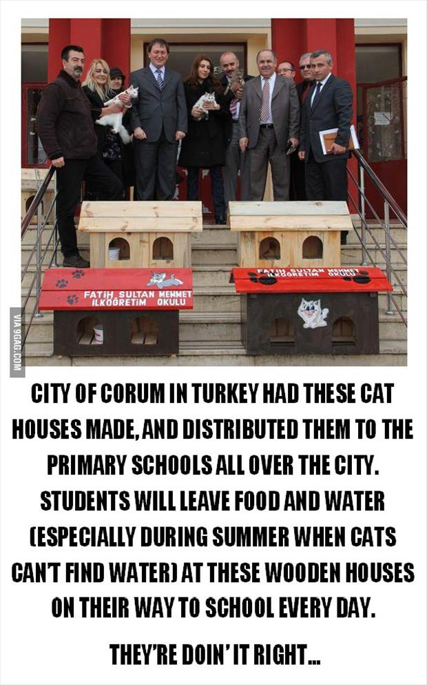 faith in humanity restored cat houses