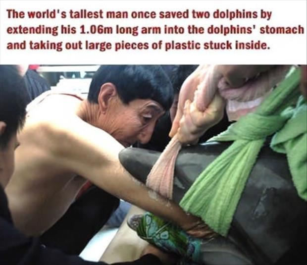 faith in humanity restored world's tallest man saves dolphins