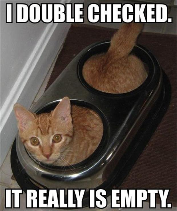 food bowl for a cat empty funny pictures