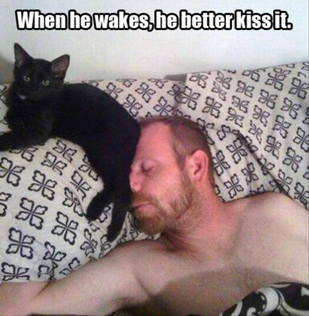funny animal pictures (19)