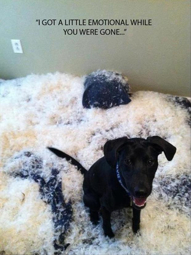funny animal pictures (30)