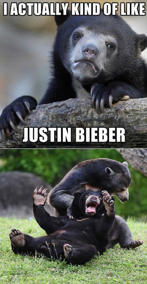 funny animal pictures (35)