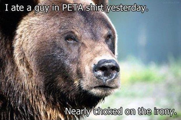 funny animal pictures (36)