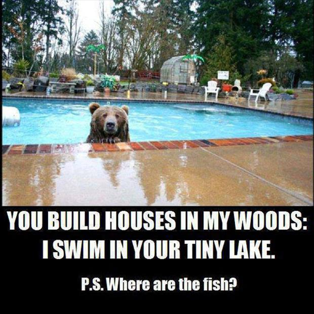 funny animal pictures (38)