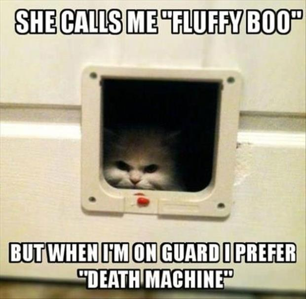 funny animal pictures (41)