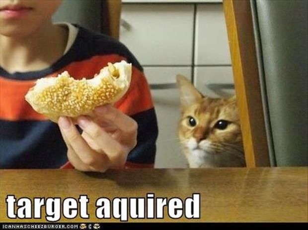 funny animal pictures (42)