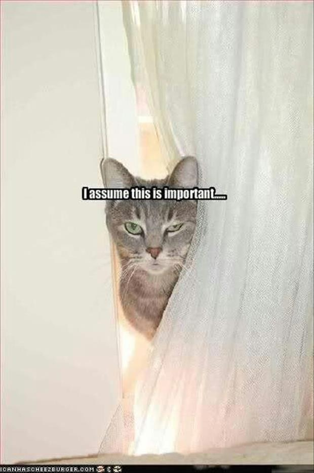 funny animal pictures (43)