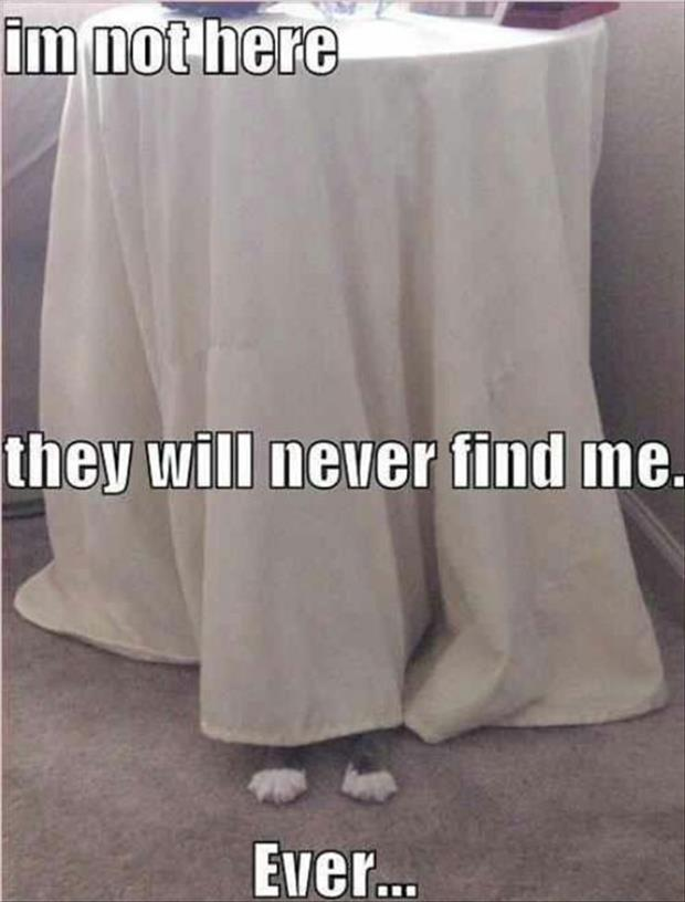 funny animal pictures (45)