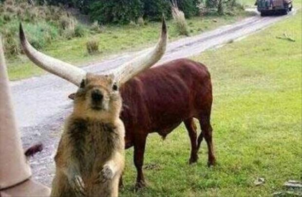 funny animal pictures of the week, dumpaday (12)