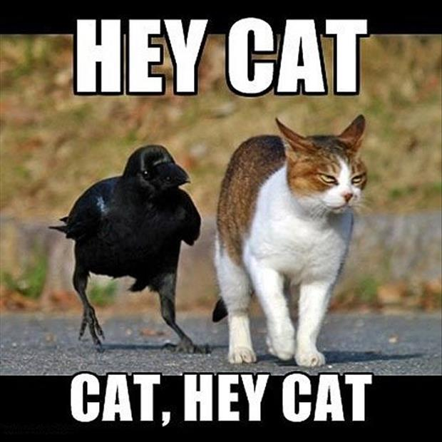 funny animal pictures of the week, dumpaday (15)