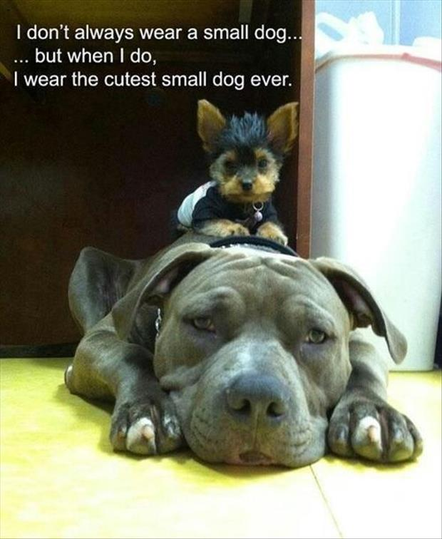 funny animal pictures of the week, dumpaday (2)