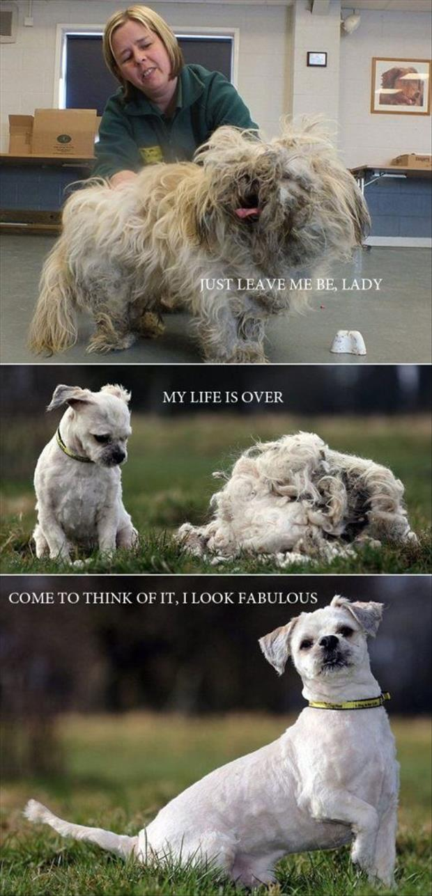 funny animal pictures of the week, dumpaday (20)
