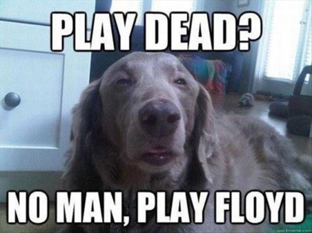 funny animal pictures of the week, dumpaday (21)