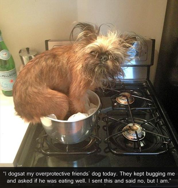 funny animal pictures of the week, dumpaday (24)