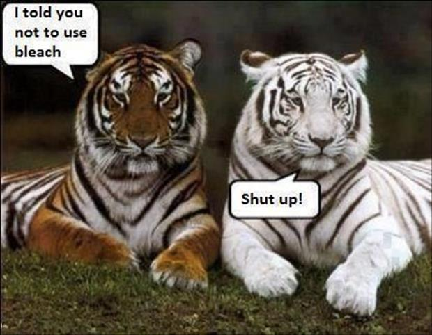funny animal pictures of the week, dumpaday (26)