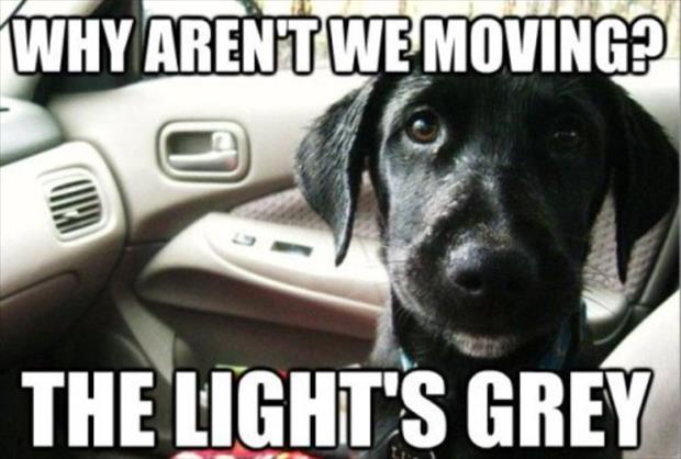 funny animal pictures of the week, dumpaday (6)