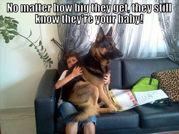 funny big dogs